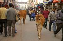 بھارت: گائے کے گوشت کے بعد انڈ ے کھانے پر بھی پابندی عائد