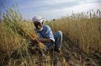 حکومت کا زرعی شعبے کے مسائل حل کرنے اور چھوٹے کاشتکاروں کی امداد کیلئے ..