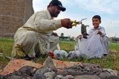 پشاور ، شہری نے طاعون کا باعث بننے والے ایک لاکھ سے زائد چوہے مار ڈالے،