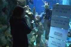 پروپوز کرنے کا نرالا انداز، نوجوان خطرناک شارک کے ٹینک میں گھس گیا