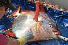 دنیا کی پہلی گرم خون والی مچھلی دریافت کرلی گئی