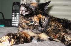 دنیا کی عمررسیدہ ترین بلی  مرحومہ ہو گئی