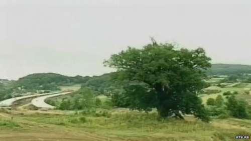 سربیا میں 600 برس پرانے درخت نے ..