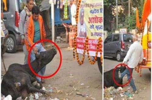 وشوا ہندو پریشد کی گائے پر تشدد ..