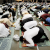 چند برسوں میں امریکی مسلمانوں ..