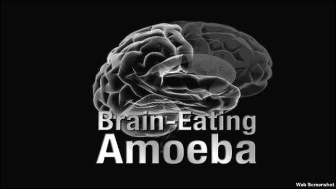 نگلیریا جرثو مہ پانی کے ذریعے انسانی دماغ تک پہنچتا ہے۔ ماہرین