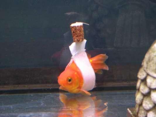 مچھلیوں کے لیے حیرت انگیز وہیل چیئر