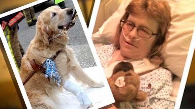 امریکی قصبہ بریوسٹر میں کتا اپنی نابینا مالکن کو بچانے کیلئے بس کے ..