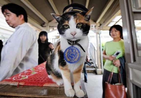 جاپان میں بلی کو مل گیا  بہت بڑا  عہدہ