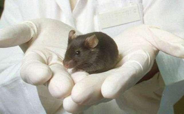 چینی سائنسدانوں نے خلیات ساق سے الزائیمر کا علاج ڈھونڈ لیا