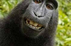 بندروں کو حقوق نہیں دئیے جا سکتے۔ جج نے فیصلہ کرلیا