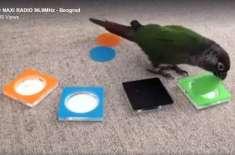 طوطا بھی رنگوںکی پہچان کر سکتا ہے
