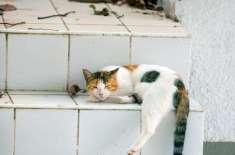 آوارہ بلی کو کھانا کھلانے پر جیل کی سزا