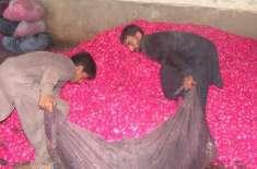 پاکستان میں پھولوں کی خرید و فروخت کی سب سے بڑی منڈی گہلن پلاٹ'تحصیل ..