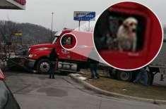 ڈرائیور کتے نے ٹرک کو درخت سے ٹکرا دیا
