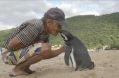 پینگوئن ہر سال 5000 میل تیر کر اپنے محسن سے ملنے آتا ہے