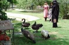 سفاری زو پارک اور چڑیا گھر لاہور کے داخلی راستوں پر واک تھرو گیٹس نصب ..