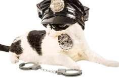 برطانوی پولیس 5سالہ بچی کی خواہش پر فورس میں  بلیوں کو بھرتی کرے گی