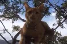 خاتون نے درخت پر چڑھی بلی کو اتارنے کے لیے کراؤڈ فنڈنگ ویب سائٹ کی مدد ..