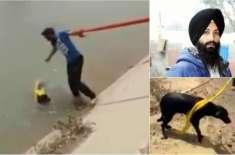 سِکھ آدمی نے ڈوبتے ہوئے کتے کی جان بچانے کے لیے اپنی مذہبی  روایات توڑ ..