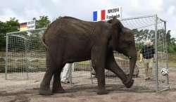 یورو کپ ،مقابلوں کے نتائج کی پیش گوئی کیلئے آکٹوپس کے بعد ہاتھی میدان ..
