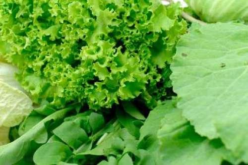 سبز پتوں والی سبزیوں کا استعمال ..