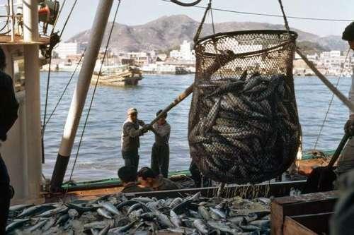 انڈونیشیا، مچھلیوں کا غیر قانونی ..