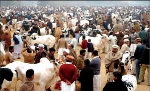 کراچی،عید الاضحی کے حوالے سے ..