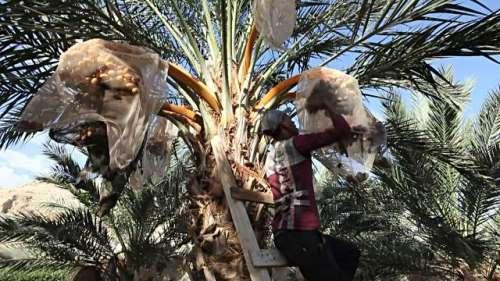 دبئی: نجی کمپنی کو  درخت سے گِر ..