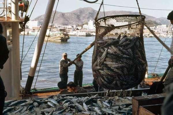 انڈونیشیا، مچھلیوں کا غیر قانونی شکار کرنے کی انوکھی سزا ، کشتی کو ..