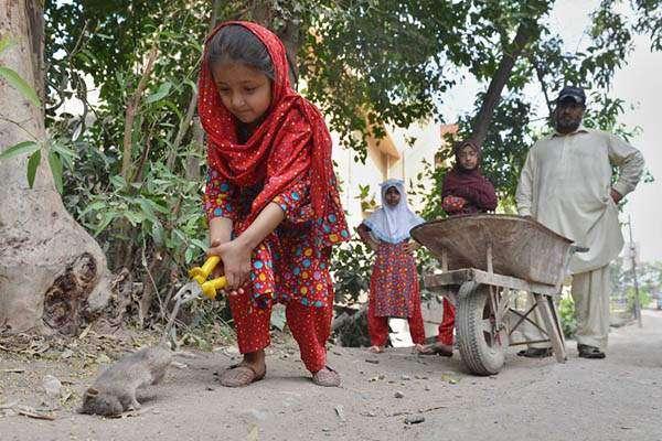 پشاور ' چوہوں کے کاٹنے بعد بندر ، کتے و بلیاں بھی شہریوں کو کاٹنے لگے