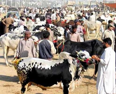 ایشیا کی سب سے بڑی مویشی منڈی میں جانوروں کی آمد شروع