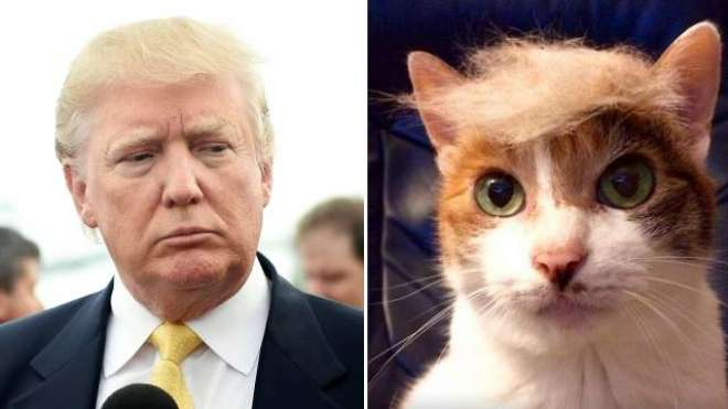 ڈونلڈ ٹرمپ کی فتح پر امریکی عوام کے ساتھ جانور بھی غصے میں