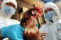 چین میں برڈ فلو کا وبائی مرض خطرناک رخ اختیار کر گیا