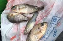 جولائی تا اکتوبر کے دوران مچھلی اور سمندری خوراک کی برآمدات میں6.10 ..