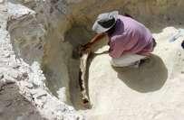 سعودی عرب ، پانچ ہزار سال پرانے ہاتھی کے باقیات برآمد