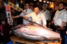 جاپانی ٹیونا کنگ نے سالانہ نیلامی میں ایک مچھلی 6 لاکھ 36 ہزار ڈالر میں ..