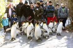 ڈاکٹروں نے جرمن عوام کو برف پر پینگوئن کی طرح چلنے کی ہدایات دے دی