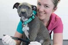 8 انچ لمبا چاقو نگل کر بھی 3 ماہ کے  کتے کی زندگی بچ گئی