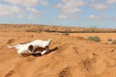 صحرائے صحارا میں کبھی آج کےمقابلے میں 10 گنا زیادہ بارش ہوتی تھی