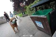 """ملیے گولڈن ریٹریور کتے سے، جس نے دریاؤں کی صفائی کا """"ٹھیکہ"""" لے لیا .."""