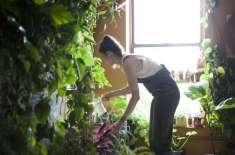 بروکلین میں رہنے والی خاتون  کے اپارٹمنٹ میں 500 پودے