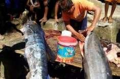 عجیب و غریب ٹیٹوز کے ساتھ پکڑی جانے والی مچھلی نے سب کو حیرت میں ڈال ..