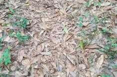 کیا آپ  اس تصویر میں موجود پتوں میں چھپے زہریلے سانپ کو تلاش کر سکتے ..
