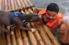 دو بہادر کتوں نے مالک کو ڈوبنے سے بچا لیا
