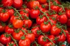 کاشتکاروں کو ٹماٹر اور گوبھی کی پنیری کی کاشت فوری شروع کرنے کی ہدایت