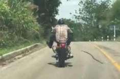 سانپ کے موٹر سائیکل سوار کو کاٹنے کی کوشش کیمرے میں ریکارڈ ہوگئی