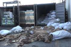 گدھوں کی 4 ہزار کھالیں کراچی سے چین لے جانے کی کوشش ناکام بنا دی گئی، ..