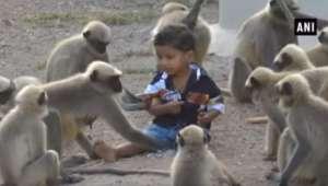 پاکستان کے سرحدی گاؤں مہت پور پر بندروں کا حملہ