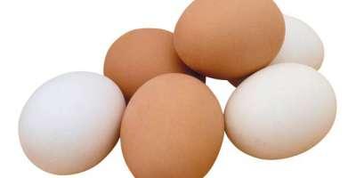 انڈوں پر تاریخ استعمال کا اندراج ضروری قرار